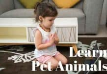 Learn-Pet-Animals
